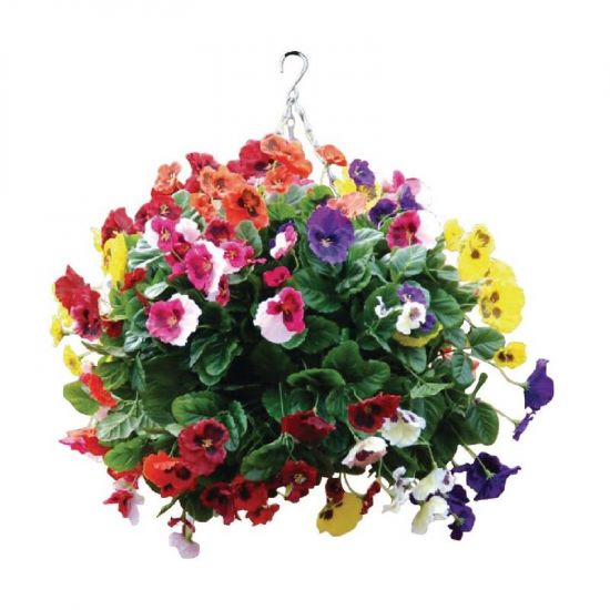 Mixed Colours Pansy Ball URO CG575